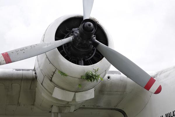 Grumman Albatross — photo by Joseph May