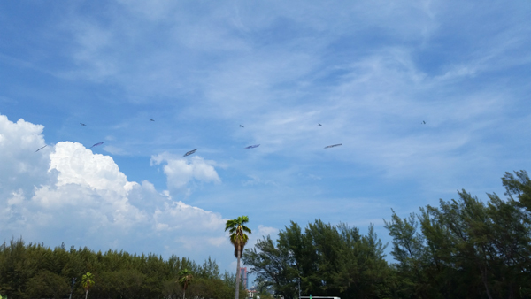 5 x Banner Plane Formation over Key Biscayne — photo by Joseph May