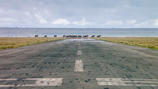 blog-airplanes_africa_elephants_runway_4k