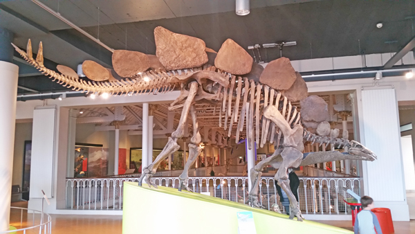 blog-stegasaurus-national-museum-of-scotland-20170208_115523